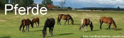 Pferde Immobilien