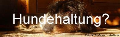 Hundehaltung erlaubt